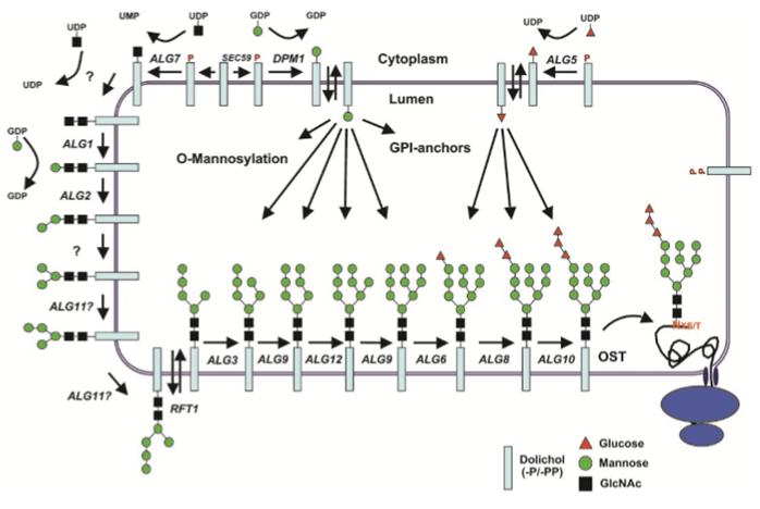 Photo of Il record informatico e la produzione delle proteine cellulari